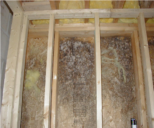 Mold Pacific Crest Inspections